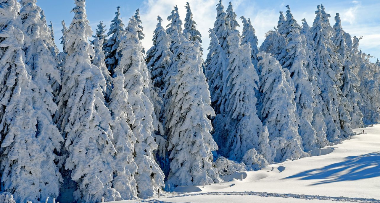 Julhälsning från Vaasa Parks och VP Facilities -teamet